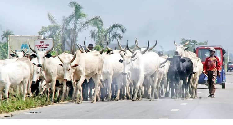 Herdsmen: Don't stop others from pursuing their businesses, northern governors