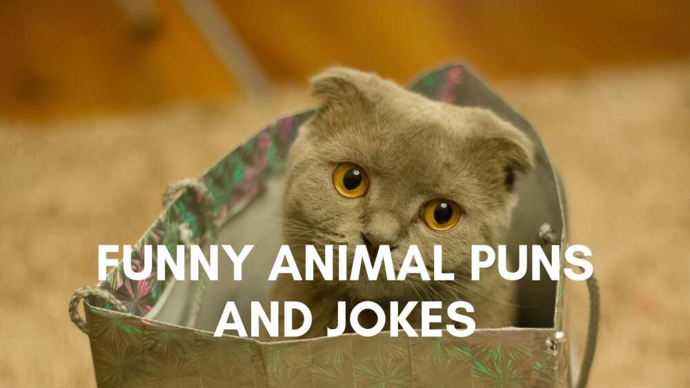 Funny animal puns and jokes