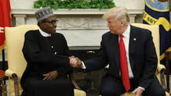 4 times Nigeria, US govts have placed bounties on Shekau, other Boko Haram leaders