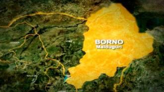 Rahoton Sirri: 'Yan bindiga daga Zamfara sun fara zuwa Borno karbar horo daga ISWAP