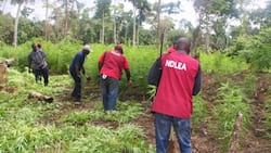 NDLEA to politicians, students: No going back on drug test