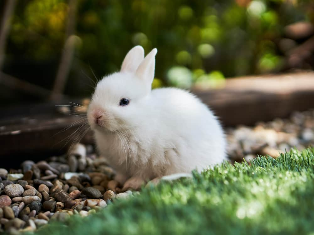 Funny bunny names