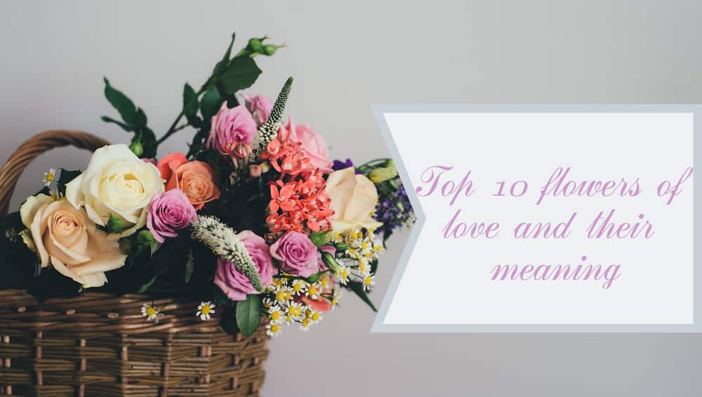 Top 10 flowers of love and their meaning