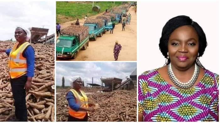 Yemisi Iranloye: Nigerian lady who left Lagos to live on a farm and now owns a billion naira cassava business