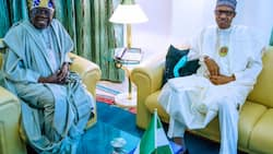 2023: Can Tinubu succeed Buhari? Prominent northern senator clears air on zoning