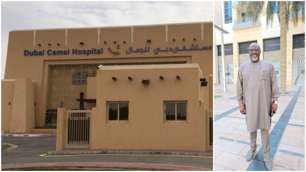 Melaye shares video of beautiful hospital built for camel in Dubai, Nigerians react