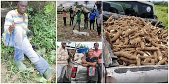 Nigerians react as government official storms farm with his family to harvest cassava