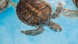 Cool pet tortoise and turtle names for your shelly best friend