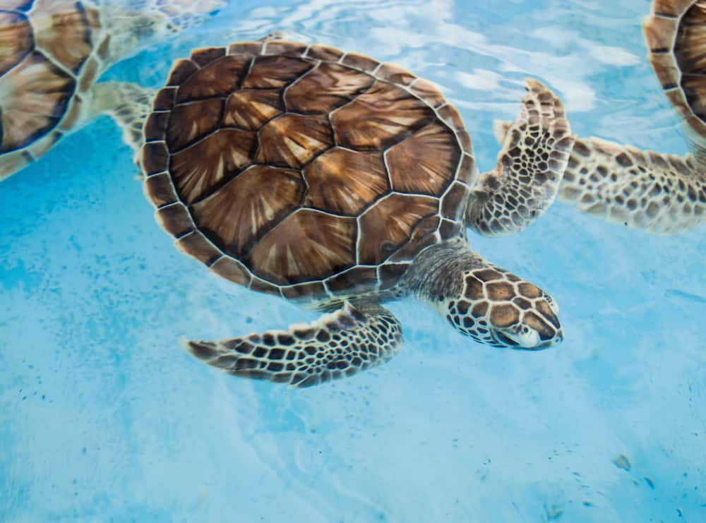 Funny turtle names