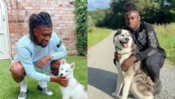 Stunning photos of Super Eagles stars celebrating their dogs on world international dog day emerge