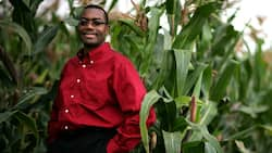 Different types of profitable farming business in Nigeria in 2019!