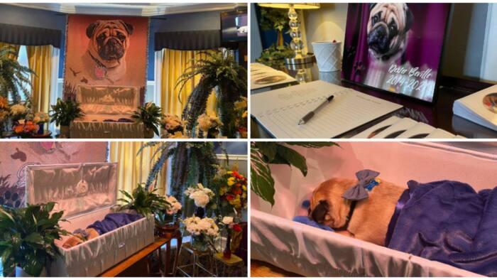 Man organizes posh burial for his dead dog, creates condolence register, stunning photos cause huge stir