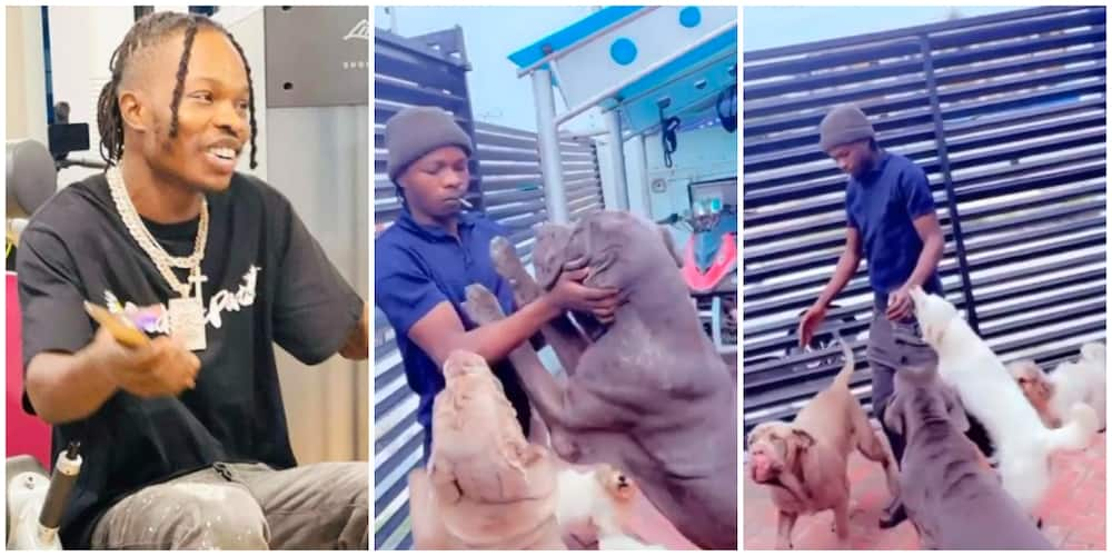Video Captures Moment Naira Marley's Huge Dogs Welcomed Singer Home