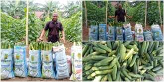 William Eke, a graduate of IMSU, went into farming on a full-time basis