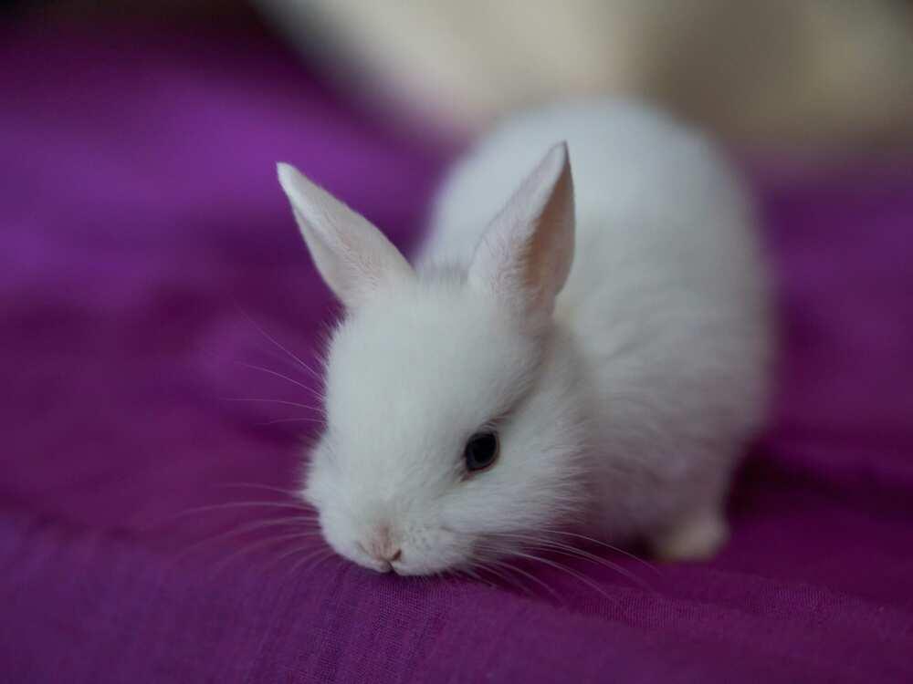 Cute bunny names