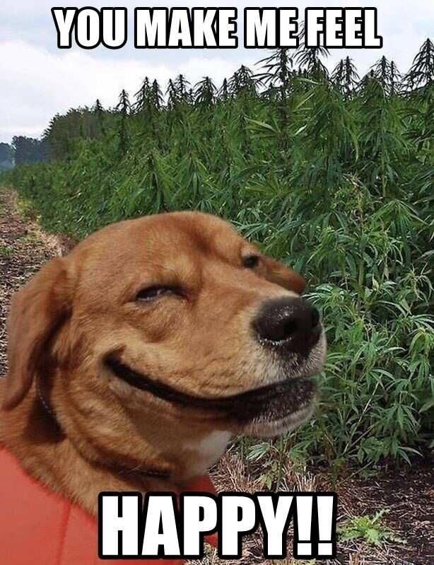 You make me so happy meme