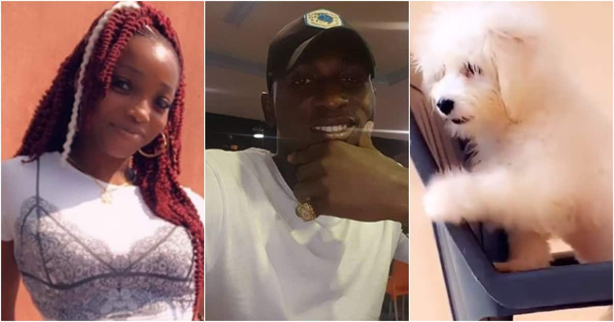 Lady shares photos of man who allegedly stole her dog, offers N50k reward - Legit.ng