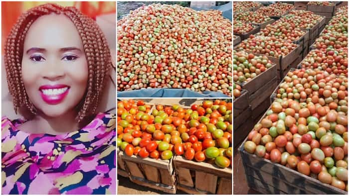 Woman shows off her massive harvest of tomatoes, says farming is beautiful, photos stir reactions