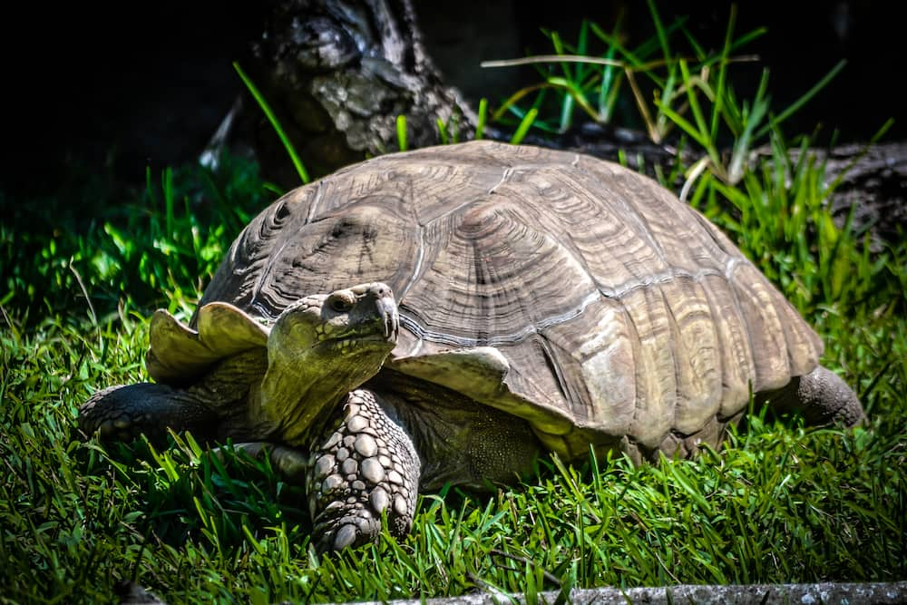 turtle names