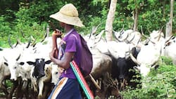 BREAKING: Herdsmen in big trouble as another southern state passes anti-open grazing bill