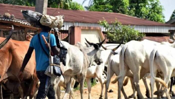 Rikici ya barke tsakanin Hausawa 'yan kasuwa da Fulani makiyaya a jihar Delta