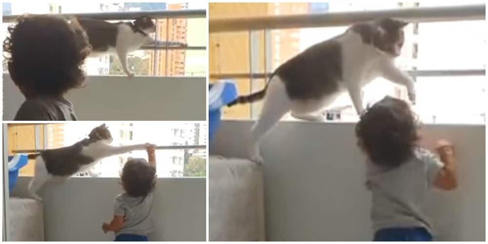 Cat prevents kid from climbing over balcony in video, stuns many people