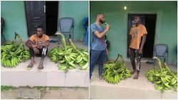 Man 'steals' bunches of plantain, says he did it for girlfriend who needed N10k makeup, Nigerians react