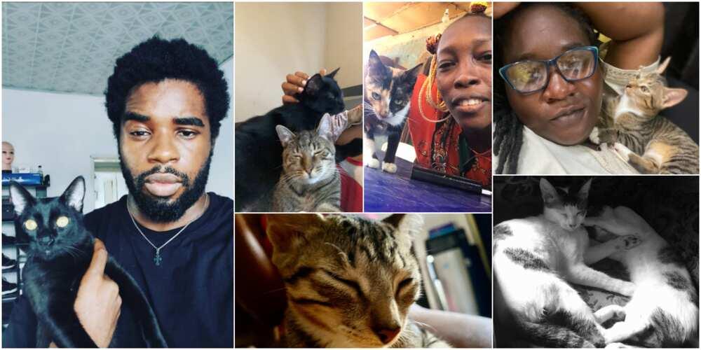 Nigerians flaunt their beautiful cats on social media