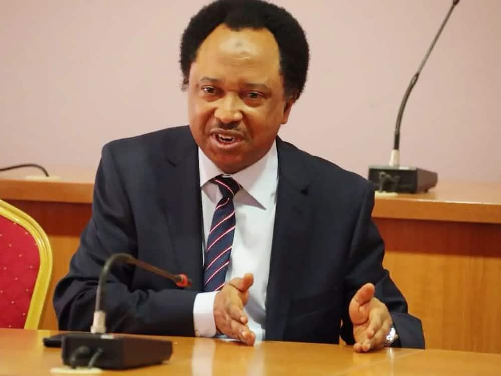 Shehu Sani reacts to stealing of Lagos monarch's office staff