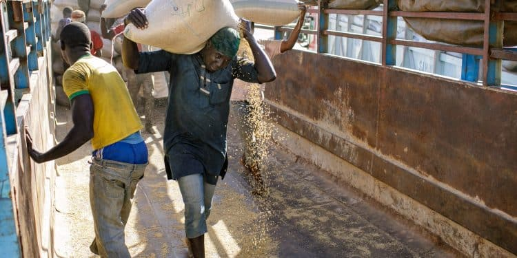 EndSARS: Rice scarcity imminent over destruction of mills by thugs