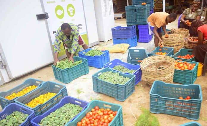 Nnaemeka Ikegwuonu: Nigerian man invents giant solar-powered refrigerators to help farmers