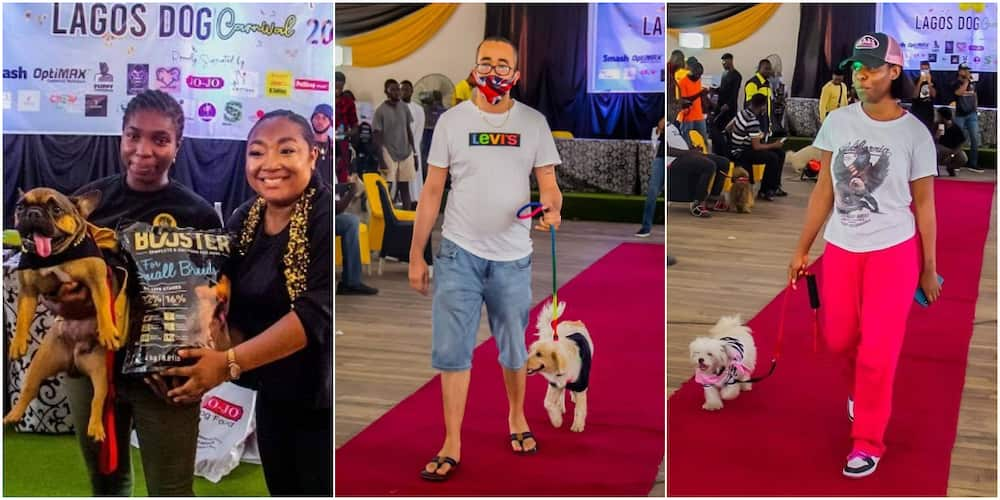 The second annual Lagos Dog Carnival