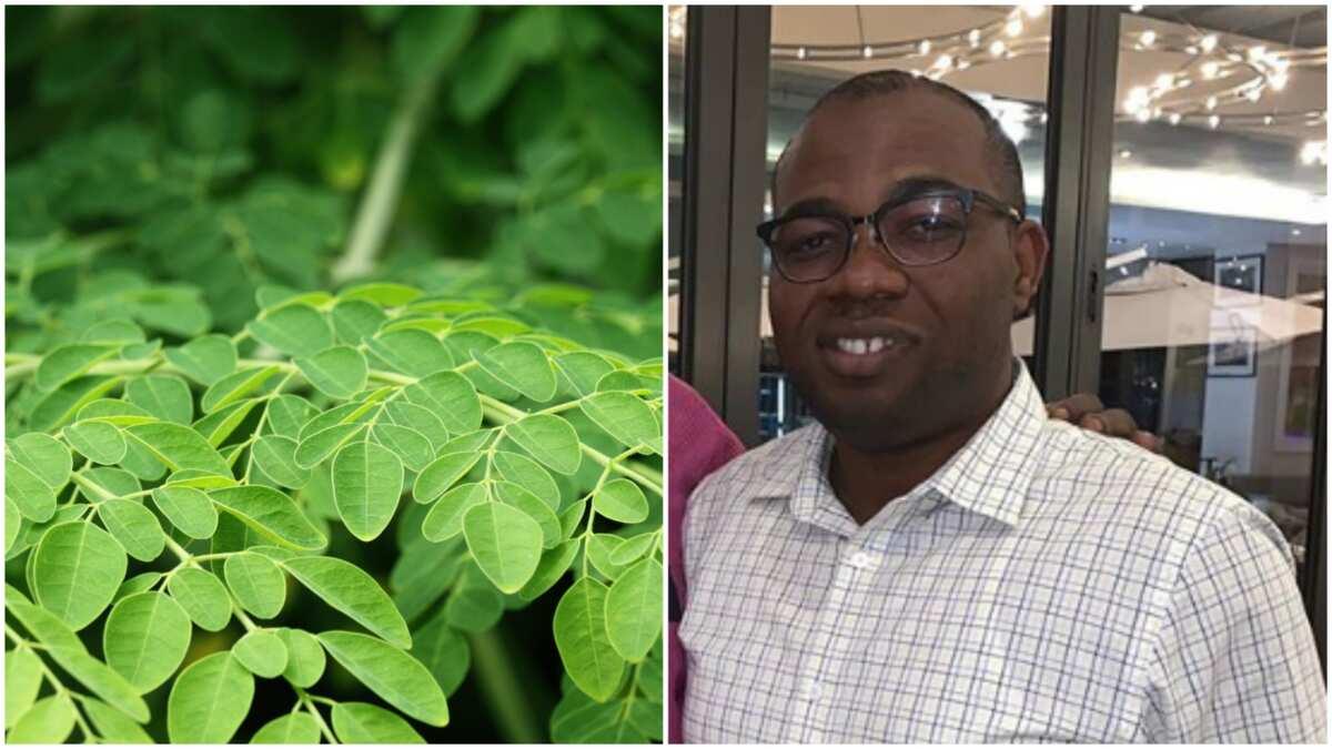 Meet Deji Adeleke, a Nigerian moringa farmer in South Africa with big factory