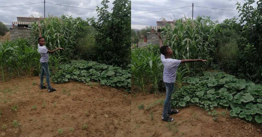 Future farmer, 11-year-old boy stuns Mzanso with veggie garden