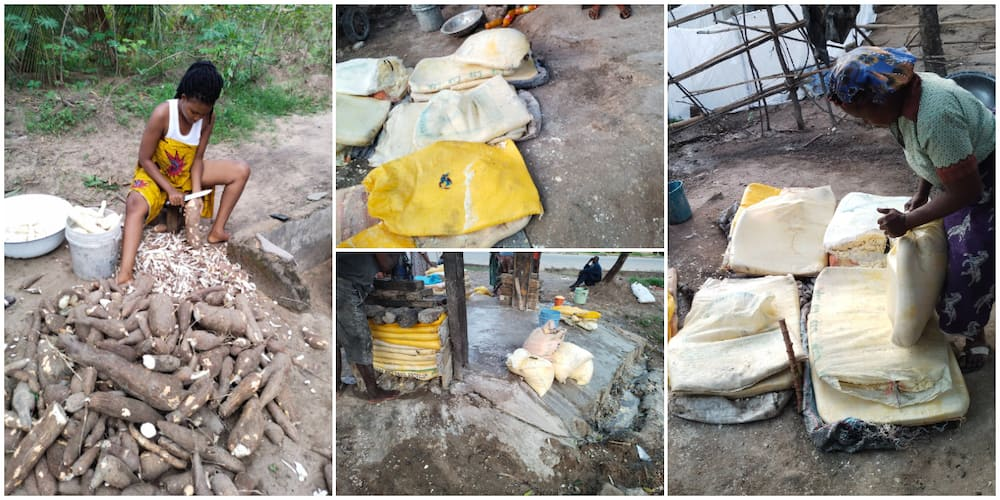 Nigerian Lady Who Recently Harvested Cassava from Her Farm Showcases the Bags of Garri it Produced, Many React