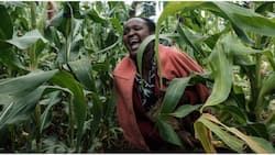 Kenyan farmers now using cryptocurrency as CBN ban on bitcoin, others remain