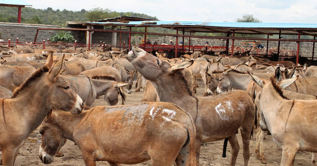 AEPB frowns at rampant sale of donkey meat in FCT - Legit.ng