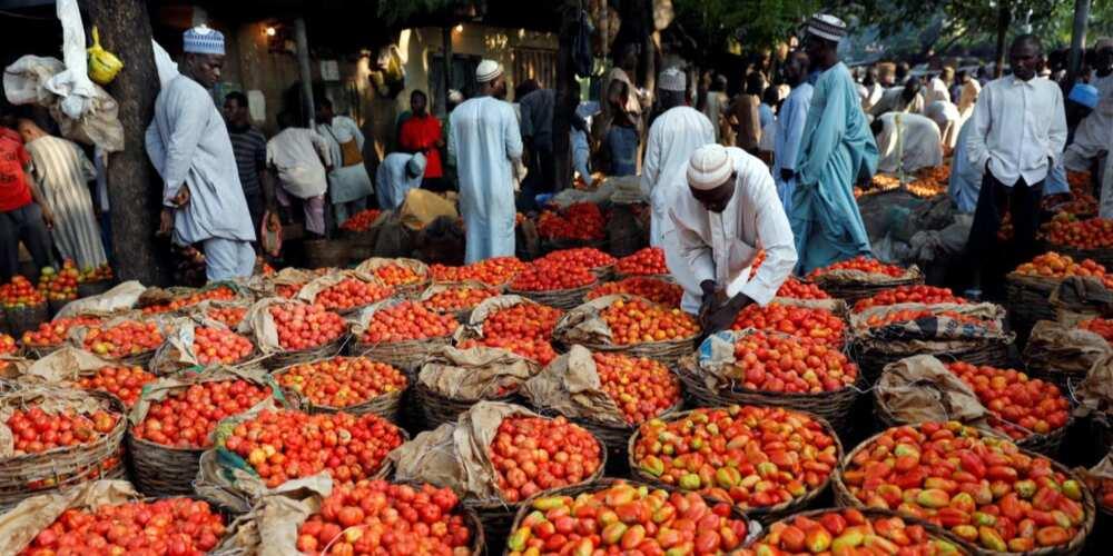 Tashin farashin masara, tumatur, dawa: Jihar Nigeria da ke fuskantar ƙarancin abinci