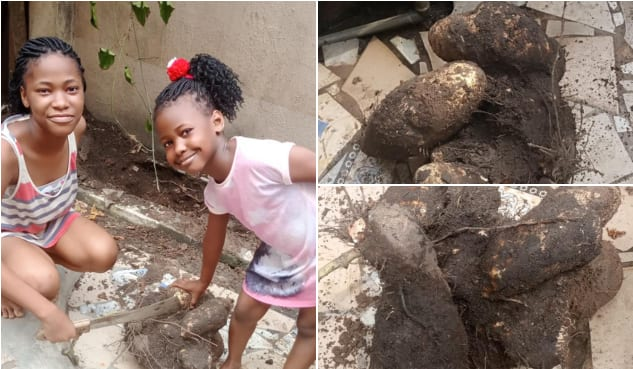 Nigerian man makes shocking discovery in kitchen after his daughters planted yam in it