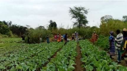 We need your help to revive our 17 irrigation schemes - Niger state govt appeals to World Bank