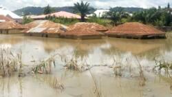 Flood wrecks havoc in Jigawa, 24 dead, 50 houses destroyed in 17 LGAs