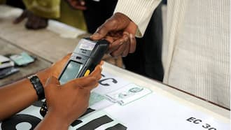 Trending: What if millions of Nigerians 'waste their votes' on the same person?