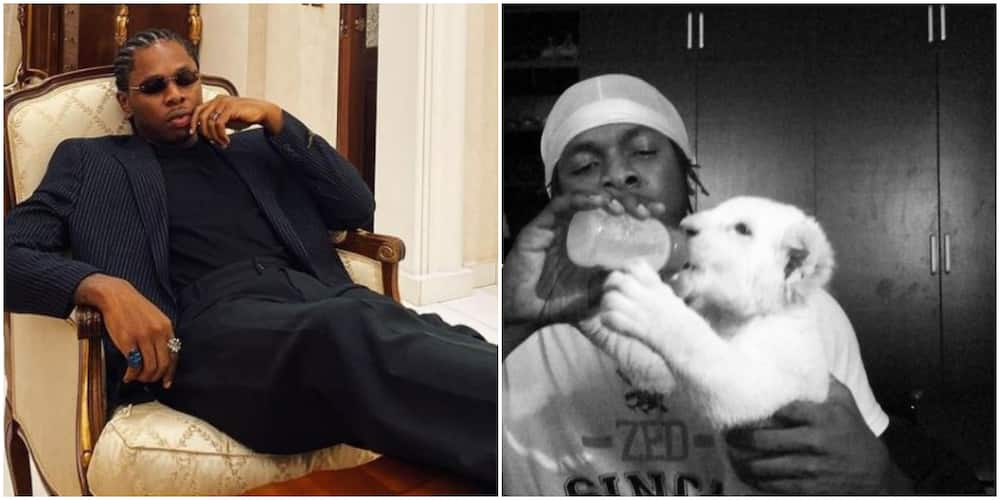 Man recounts funny experience with singer Runtown's pet lion