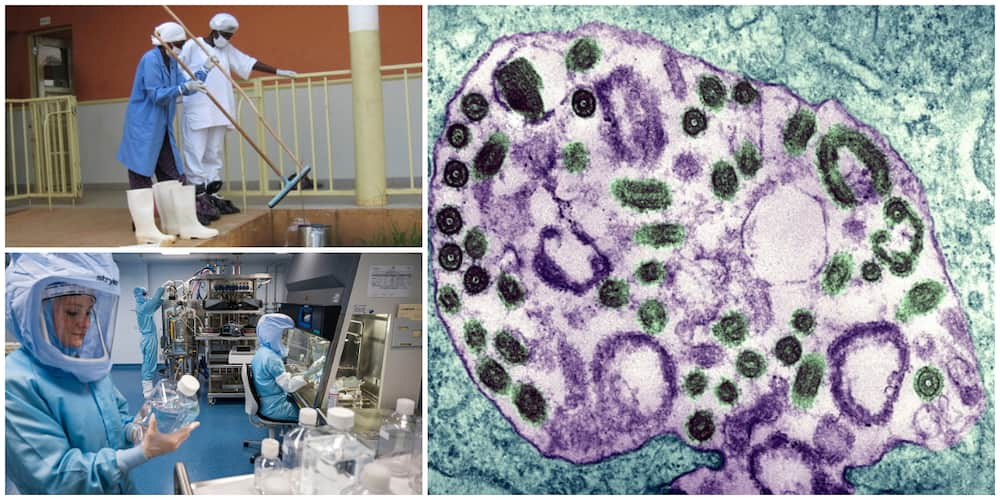 5 real facts about the Marburg virus that is considered to be extremely dangerous
