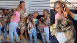 I had to bribe them: Actress Mercy Johnson shows off 2 security dogs she got for her kids