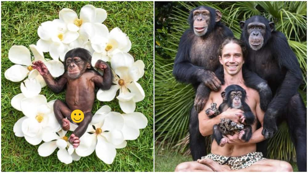 Man gives newborn monkey photoshoot as if it's human baby, photos causes frenzy online