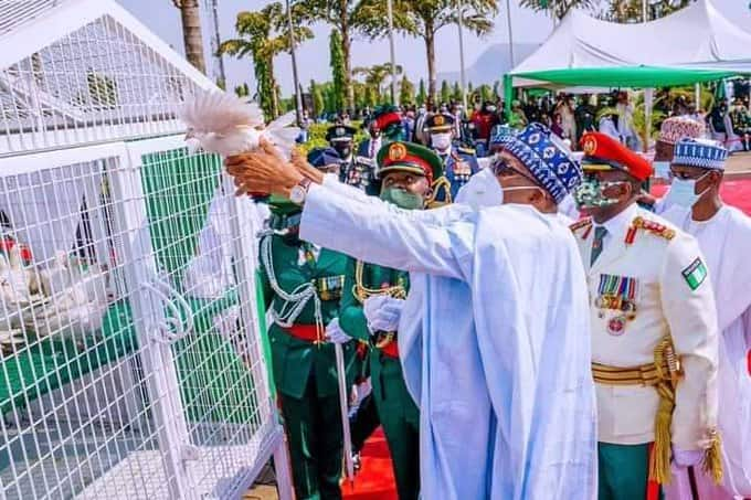 Presidency finally reveals why pigeons released by Buhari didn't fly