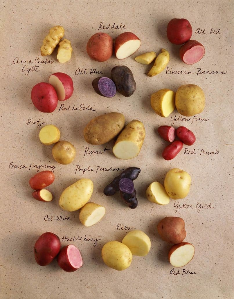 Different types of potatoes and uses ▷ Legit ng