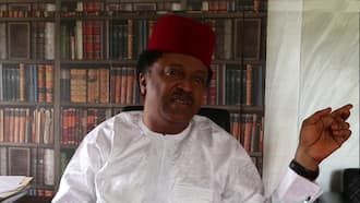 Shehu Sani reacts as thunderstorm disperses Yoruba nation agitators in Osogbo