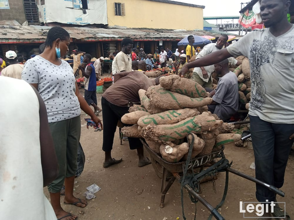 Yam is very expensive at the market; especially the big-sized yam. Photo credit: Esther Odili